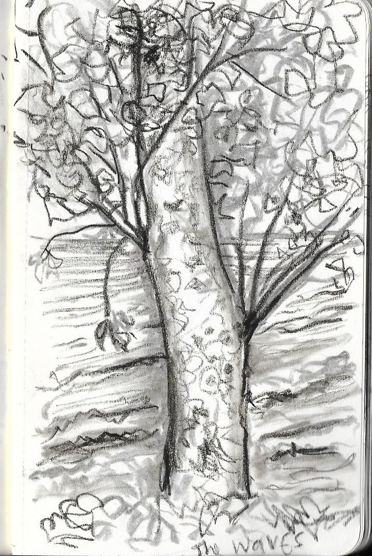 2 harb old birch 2
