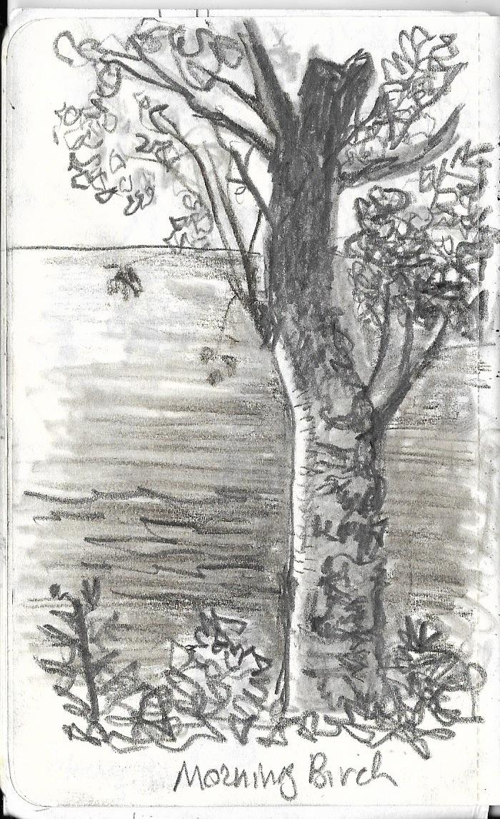 2 morning birch