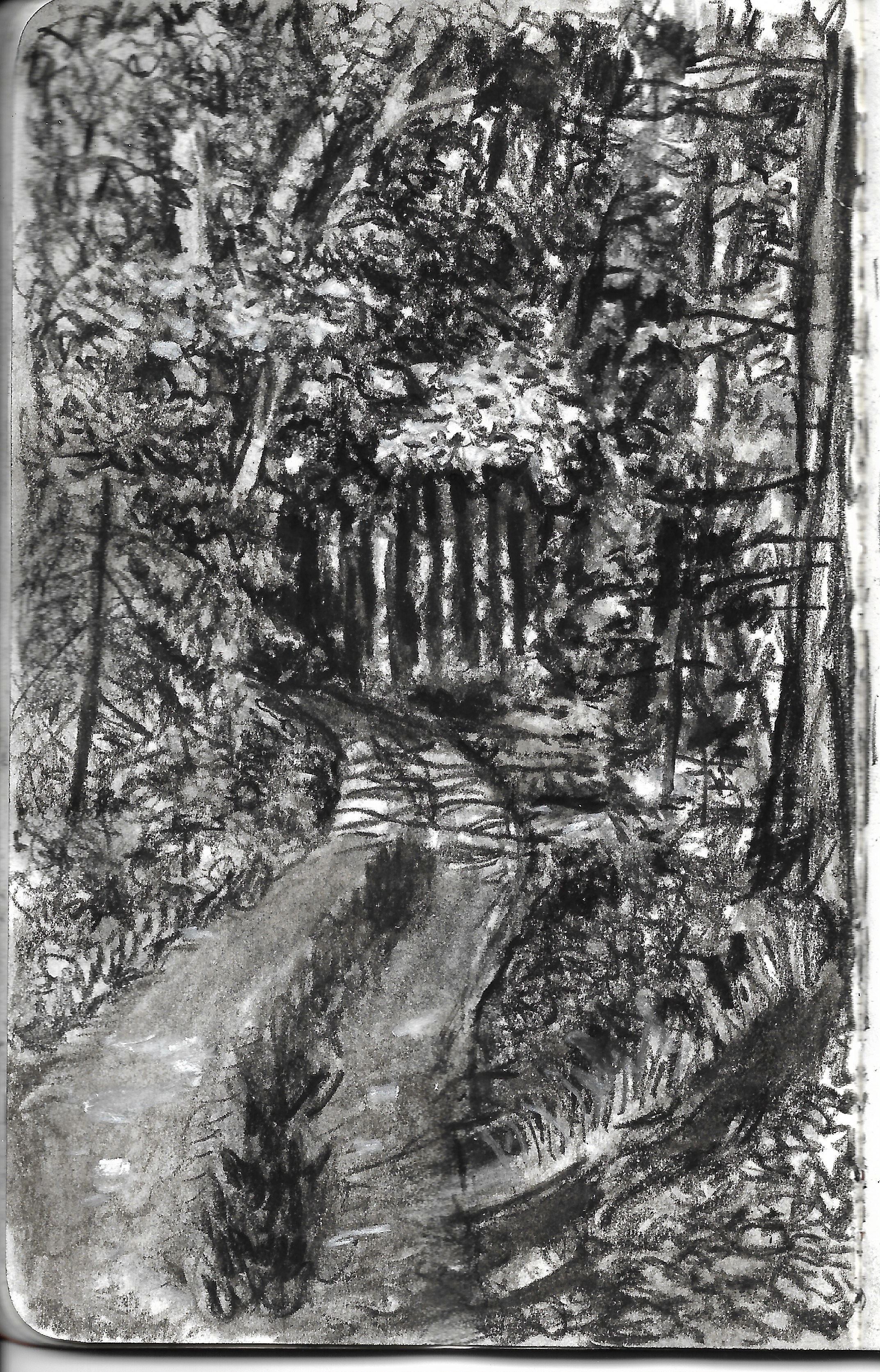 bear head lake path